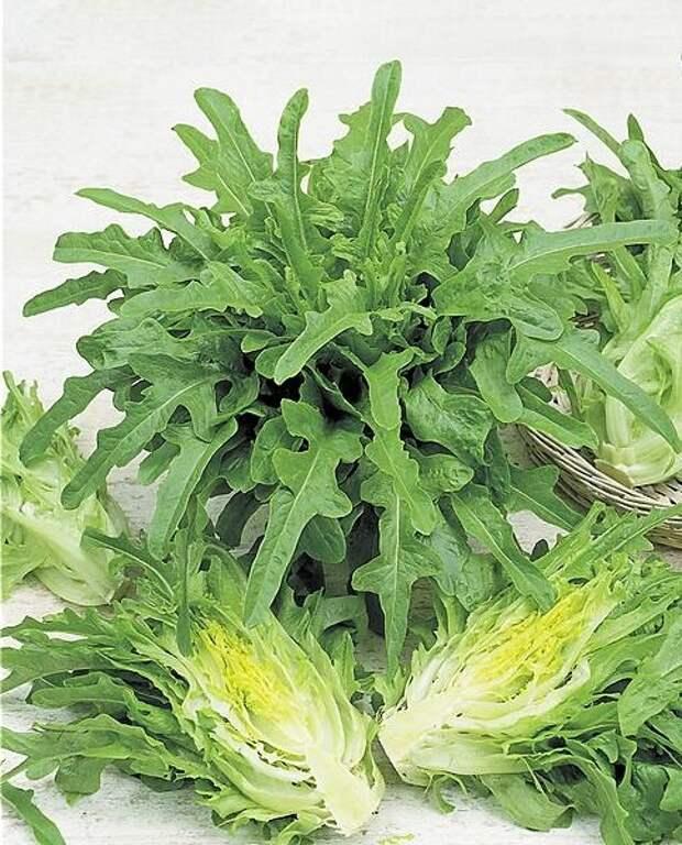 Марокканский кресс-салат. Канарские язычки.
