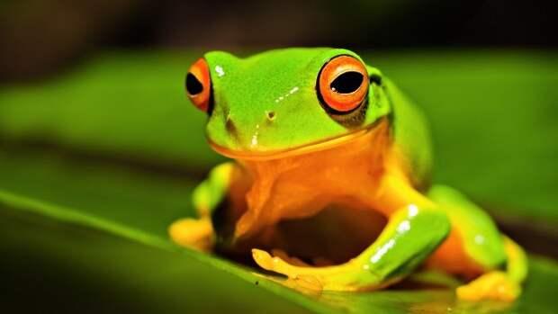frog1-e1380733896784