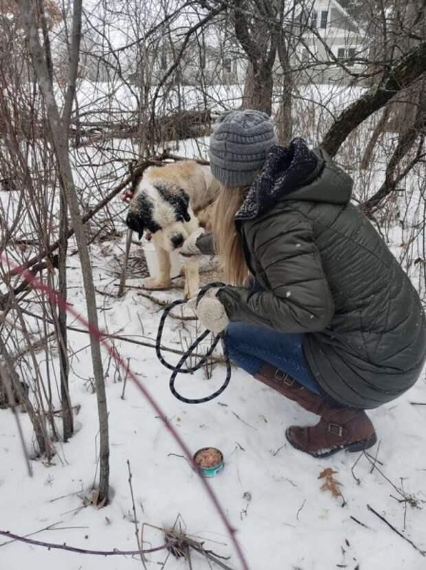Старушка в лесу: собаку нашли привязанной к дереву
