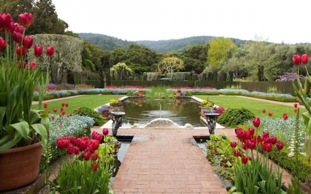 Тюльпаны в дизайне сада фото