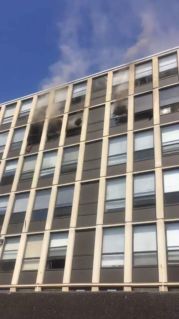 В США кот выпрыгнул из окна пятого этажа и остался жив