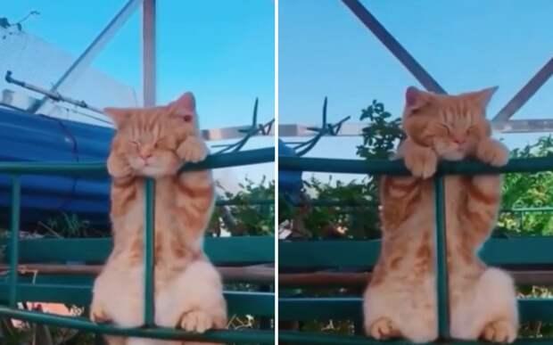 И так удобно: на видео сняли кота, которому не нужны никакие лежанки