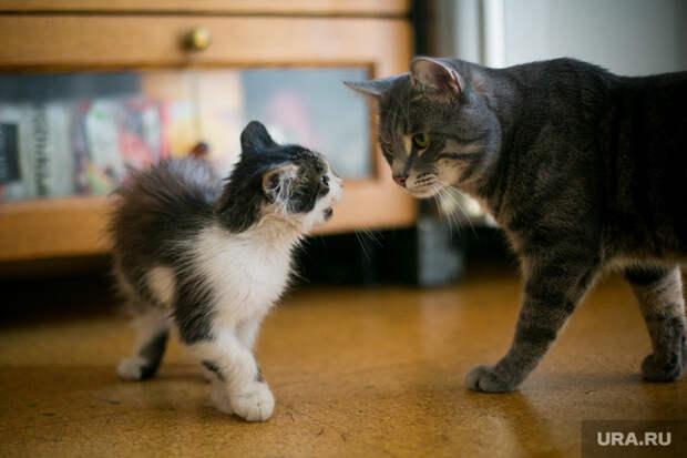 Сенаторы предложили ограничить число кошек и собак в квартирах