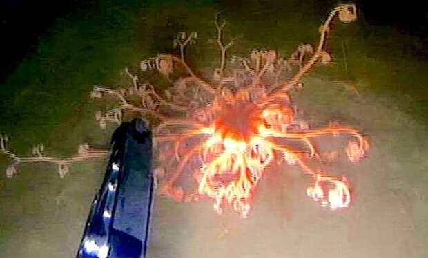Горгона: диковинное существо из глубин Карского моря
