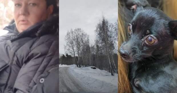 """""""Ничего у вас не болит?"""": семейная пара выбросила собак в лесу, но не успела скрыться от волонтеров"""