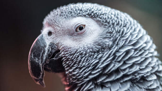 Насколько разумны птицы?