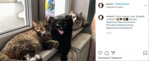 Фото дня: кошачье трио в Савеловском