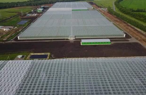 Сначала года Россия увеличила производство тепличных овощей на40%