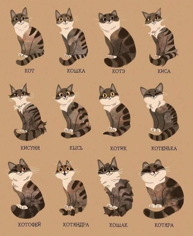 А как вы называете своего котика?