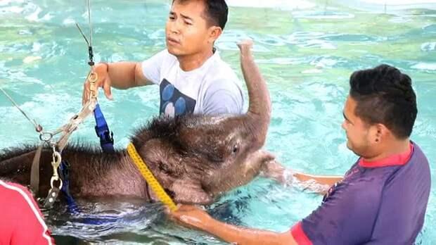 В Таиланде раненного браконьерами слонёнка лечат купаниями