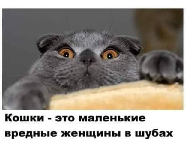 - Дорогая, хочется уже нормально и сытно поесть!.. Что у нас будет на ужин?...