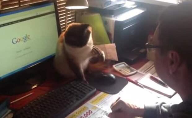 Этот кот может сражаться за мышь до бесконечности!