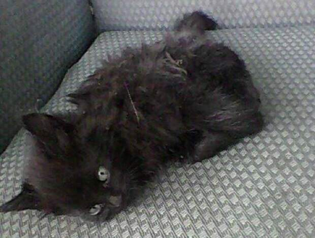 """""""Он был полностью неподвижен…"""" Котёнок с неизвестной болезнью лежал посреди улицы и ждал чуда"""