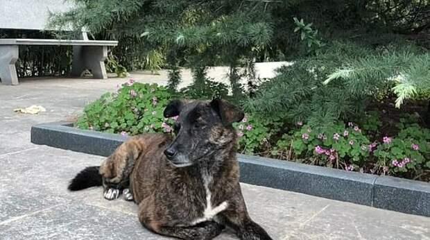 Брошенный пес уже три года ждет своего хозяина возле многоквартирного дома