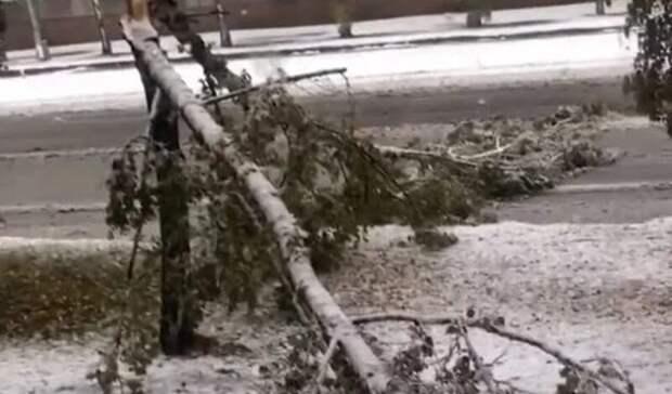 Кемеровскую область накрыл первый снегопад