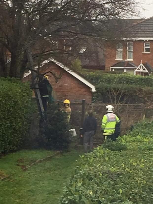 Кот залез на дерево и застрял, хозяйка полезла его спасать и тоже застряла. Потом приехали пожарные...