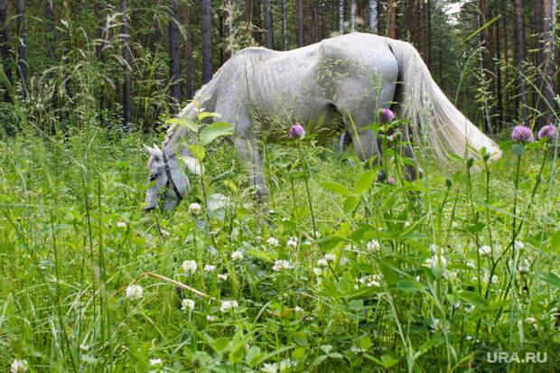 Жительницу Екатеринбурга набазе отдыха покусала лошадь