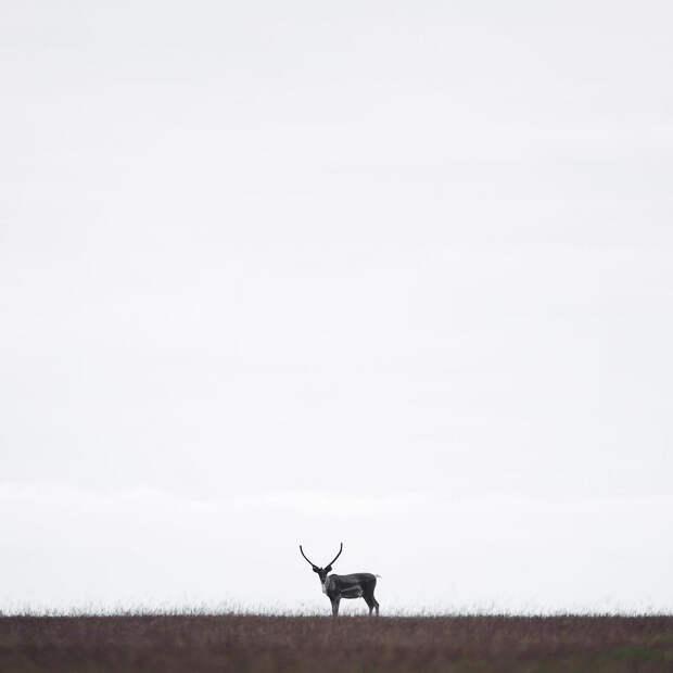 Когда дикая природа вызывает восторг. Фотограф Донал Бойд 6
