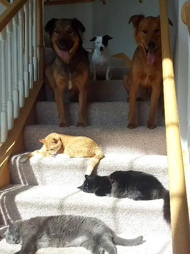 Коты и собаки животные, котики, лучи, погреться, солнечные ванны, солнце, температура, тепло