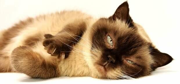 как общаться с кошкой на ее языке (фото pixabay.com)