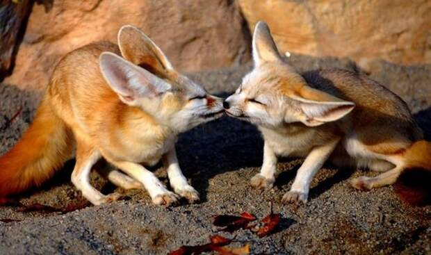 Сколько нежности на этих снимках влюбленных животных