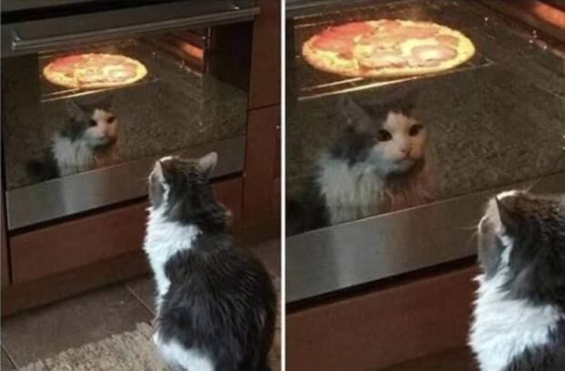 Кот следит за пиццей в духовке