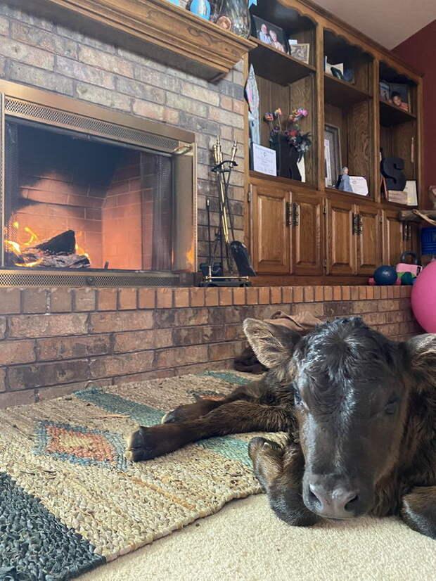 Фермеры в США пустили коров, овец и гусей в дома из-за морозов