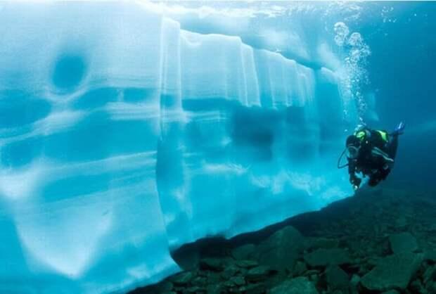 Дайвинг под ледяными глыбами (15 фото)