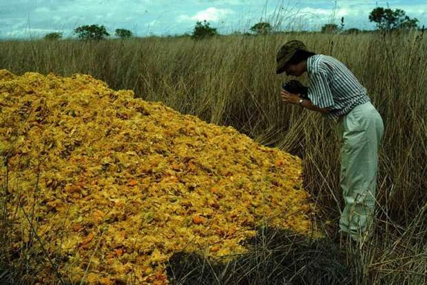 Как куча апельсиновых корок поменяла экосистему в Центральной Америке