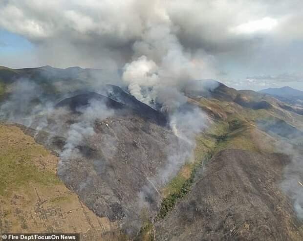 Бразильский пенсионер сжег 700 гектаров заповедного леса ипогубил сотни животных из-за страховой аферы