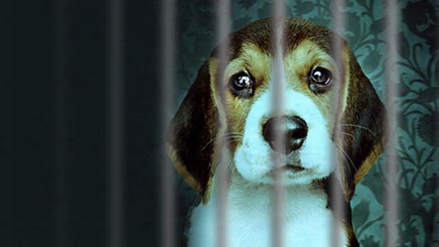 Собачья тюрьма