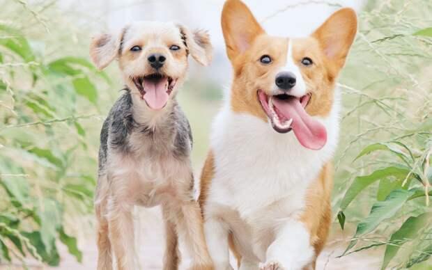 В Черкизове бесплатно вакцинируют домашних животных от бешенства
