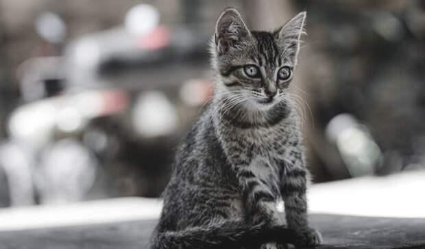 Смерть привитого иусыпление спасенного котенка. Итоги дня вСвердловской области