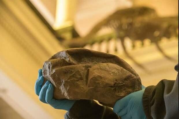 Группе ученых удалось раскрыть тайну «сдувшегося мяча» из Антарктиды