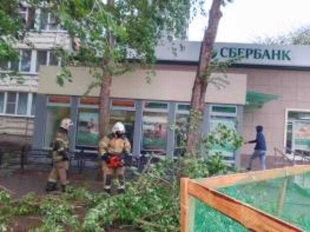 В Волгодонске штормовой ветер валил деревья на машины, дома и остановки (фото)