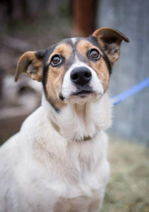 Беспомощную собаку выгнали из дома волонтер, истории спасения, пес, приют, собака
