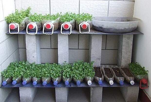 Простой и нетрудоемкий способ вырастить рассаду