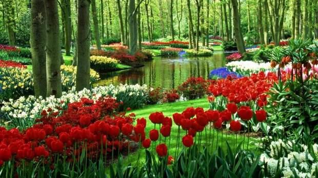 Тюльпаны в ландшафтном дизайне фото