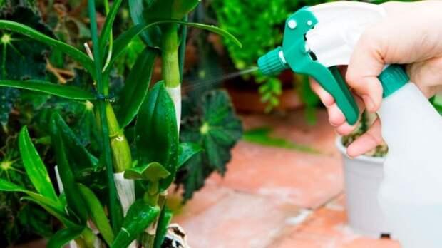Опрыскивание и полив орхидей