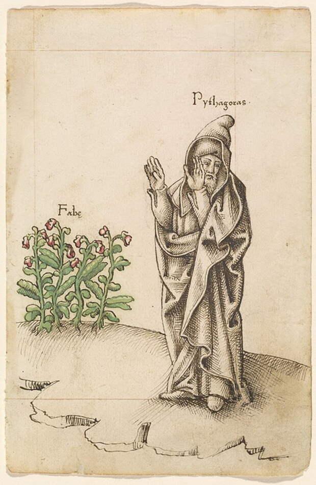 Пифагор отказывался не только от мяса, но и от бобов