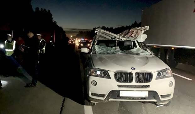 После ДТП с лосем водитель BMW погиб под Екатеринбургом
