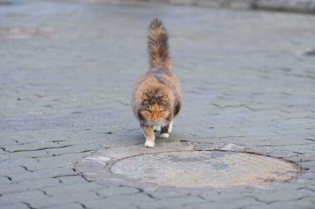 Лучший индикатор настроения кошки - ее хвост Фото: Иван ВИСЛОВ