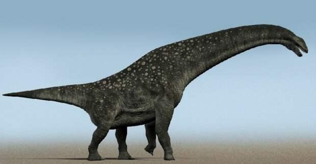Новый вид динозавра оказался самым крупным из когда-либо обнаруженных в Австралии