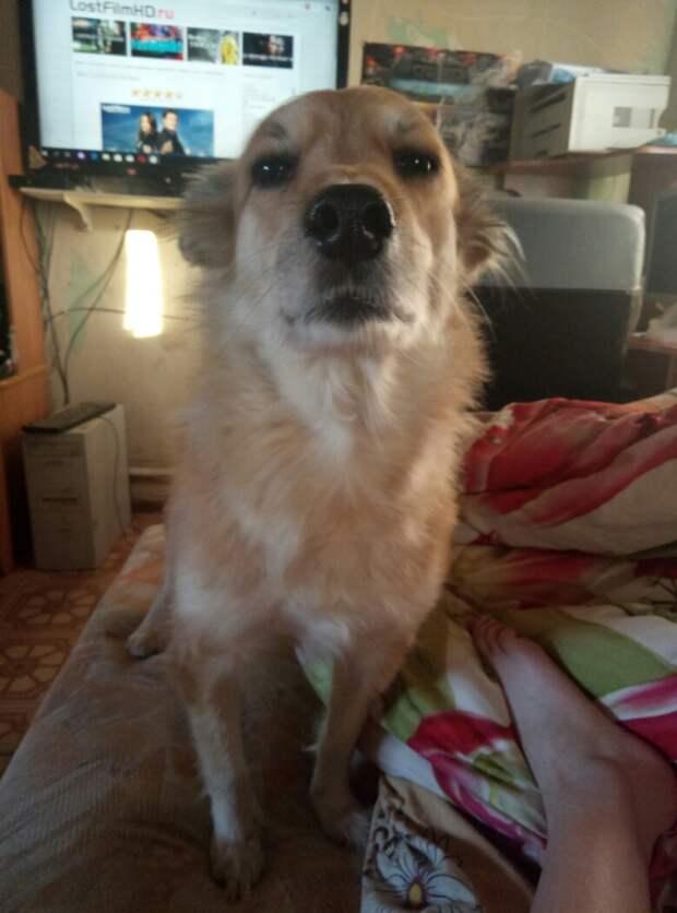 5 лет назад собака родила под крыльцом в лютые морозы, спасти удалось одного одного щенка...
