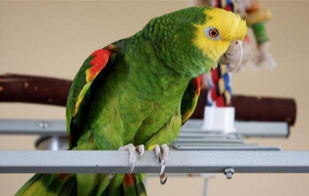 Смешное объявление о продаже попугая