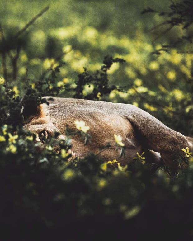 Когда дикая природа вызывает восторг. Фотограф Донал Бойд 44