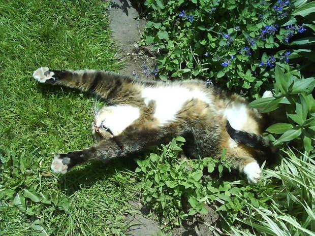 Уноси готовенького! животные, забавно, изменение сознания, кошачья мята, кошки, растения, смешно, фото
