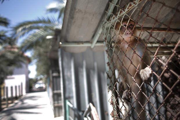 Самый худший в мире зоопарк