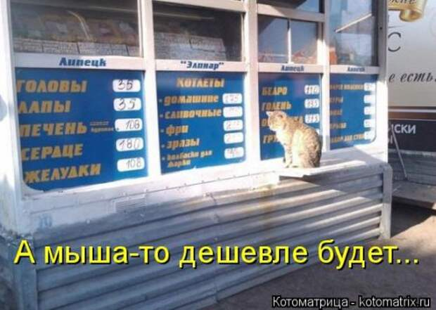 Свежая котоматрица для всех (31 шт)