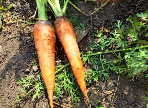 Доставайте снова семена: что не поздно сеять в июне
